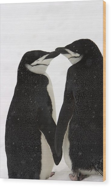 A Pair Of Chinstrap Penguins Wood Print