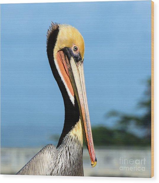 A Pelican Posing Wood Print