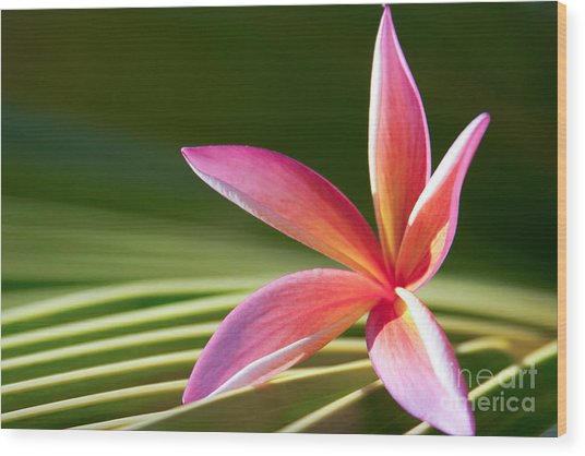Wood Print featuring the photograph A Pure World by Sharon Mau