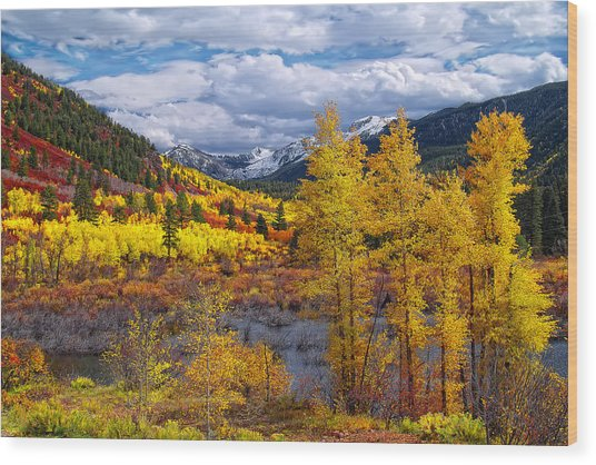 A Symphony Of Colors Wood Print