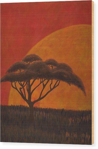 Acacia At Sunset Wood Print by Diane Korf