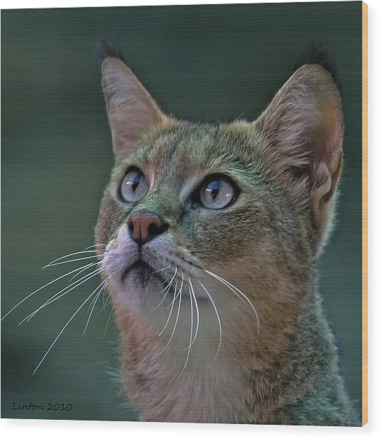 African Wild Cat Wood Print by Larry Linton