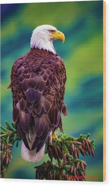 Alaska Bald Eagle Wood Print