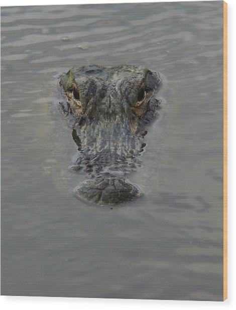 Alligator One Wood Print