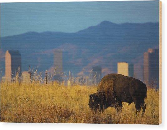 American Bison And Denver Skyline Wood Print