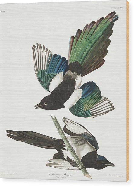 American Magpie Wood Print