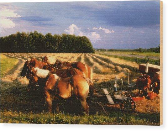 Amish Hay Rig Wood Print