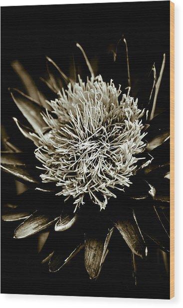 Artichoke Flower Wood Print by Frank Tschakert