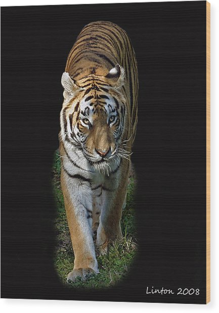 Asian Tiger Wood Print