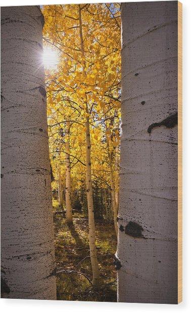 Aspen Gold Wood Print