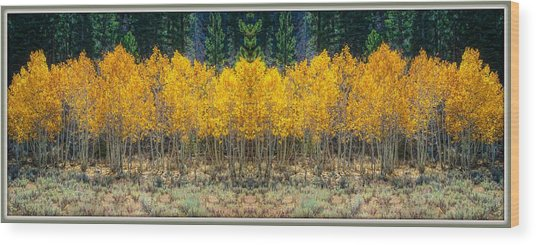 Wood Print featuring the photograph Aspen Stand by Sherri Meyer