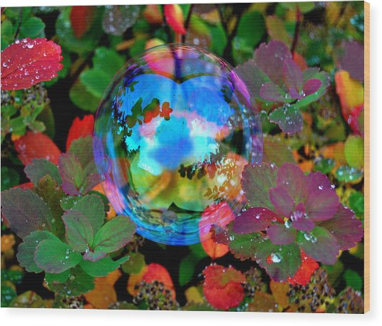 Autumn Bubble Wood Print