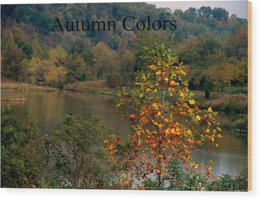 Autumn Colors Wood Print by Gary Wonning