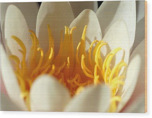 Awakening Wood Print by Nataliya Dmitrieva