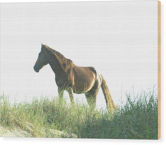 Banker Horse On Dune - 2 Wood Print
