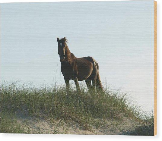 Banker Horse On Dune - 3 Wood Print