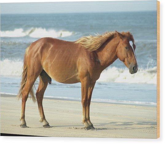 Banker Horses - 2 Wood Print