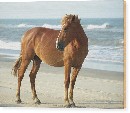 Banker Horses - 6 Wood Print