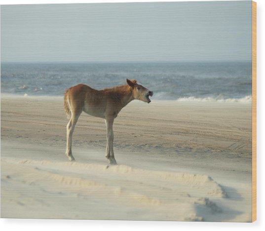 Banker Horses - 8 Wood Print