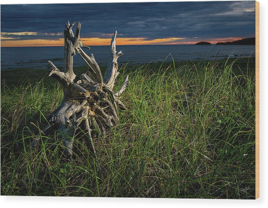 Wood Print featuring the photograph Beached II by Doug Gibbons