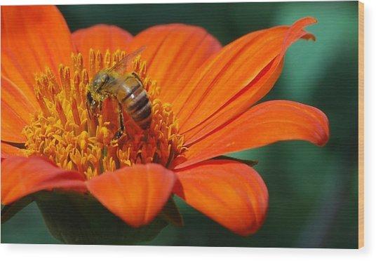 Bee-utiful Wood Print