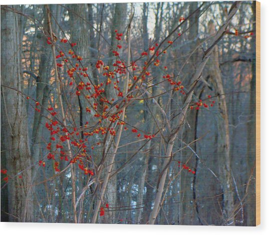 Berries In Bloom Wood Print by Kate Collins
