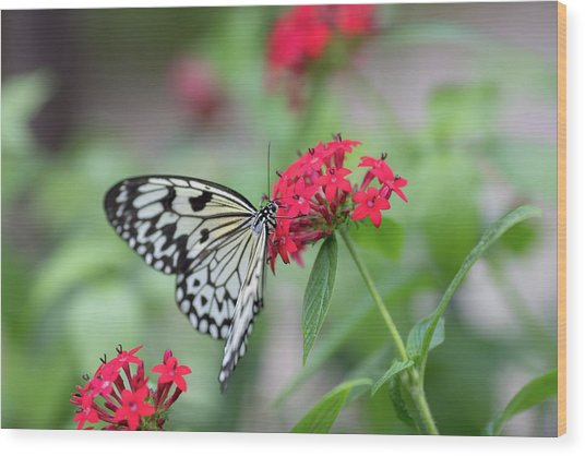 Wood Print featuring the photograph Black And White Butterfly  by Raphael Lopez