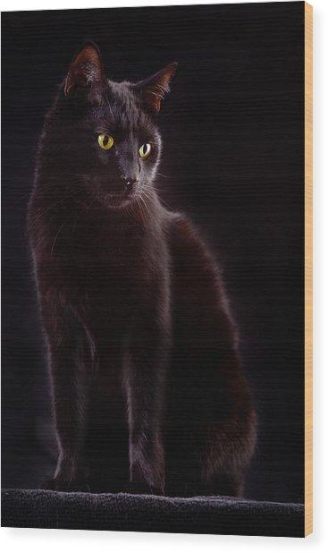 Black Cat Wood Print