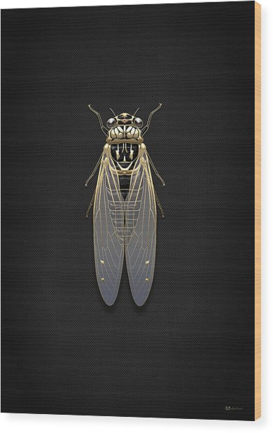 Black Cicada With Gold Accents On Black Canvas Wood Print