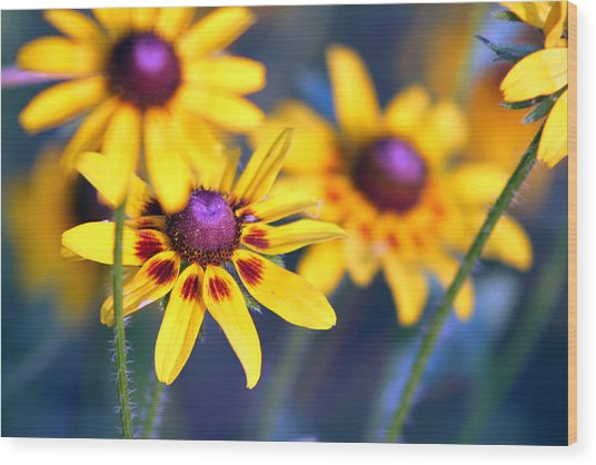 Black Eyed Susan's Wood Print by Evelyn Patrick