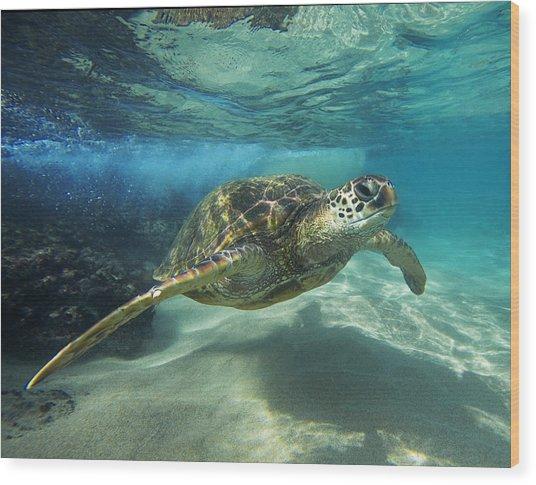Black Rock Turtle Wood Print