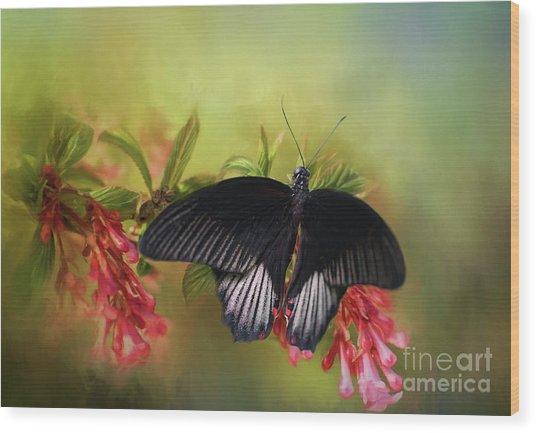 Black Velvet Wood Print by Eva Lechner