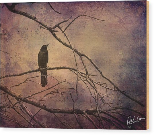 Blackbird 2 Wood Print by Christine Hauber