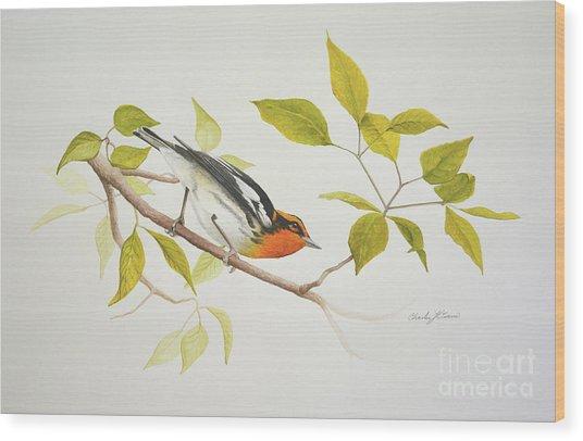 Blackburnian Warbler Wood Print