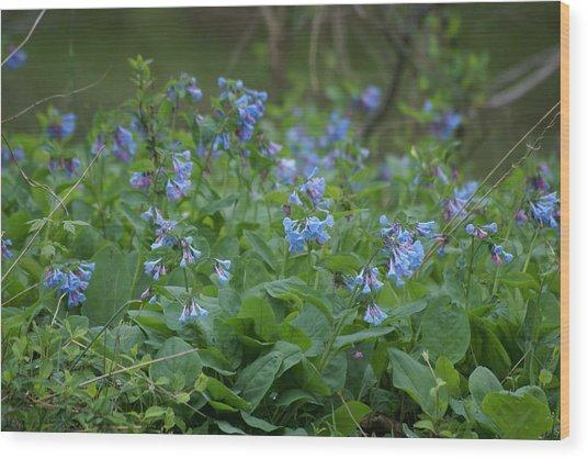Blue Bells Wood Print