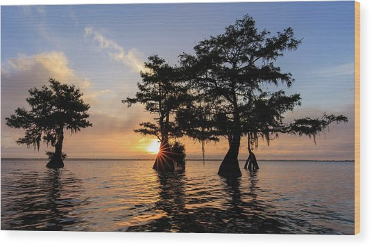 Blue Cypress Lake Morning Wood Print