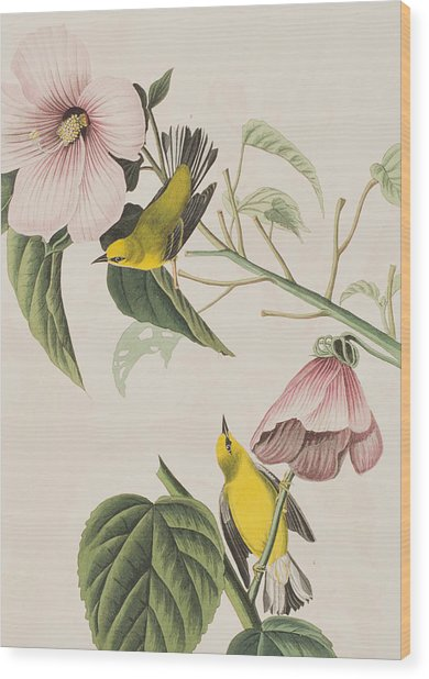Blue-winged Yellow Warbler  Wood Print