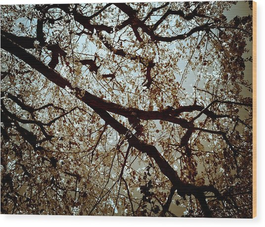 Branch One Wood Print
