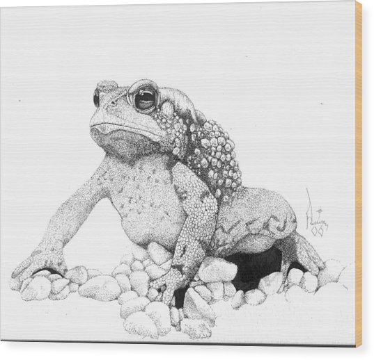 Bufo Americanus Wood Print by Preston Shupp