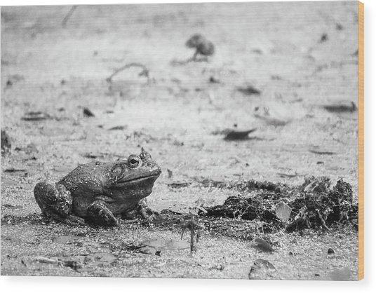 Bull Frog Wood Print