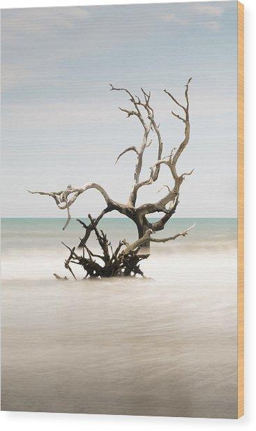 Bulls Island C-vi Wood Print