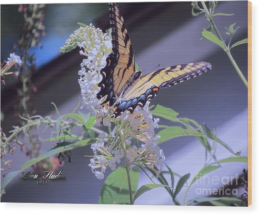 Butterfly Bush ,butterfly Included Wood Print