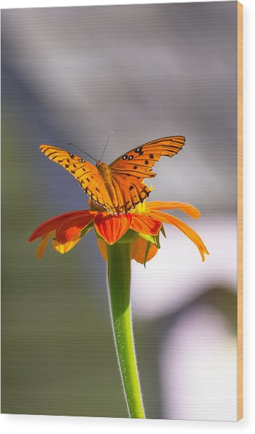 Wood Print featuring the photograph Butterfly On Flower by Willard Killough III