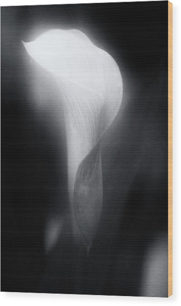 90113 Calle Lily B/w Wood Print