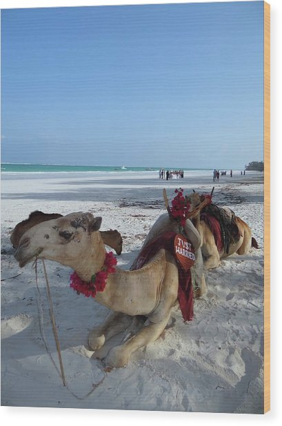 Camel On Beach Kenya Wedding Wood Print