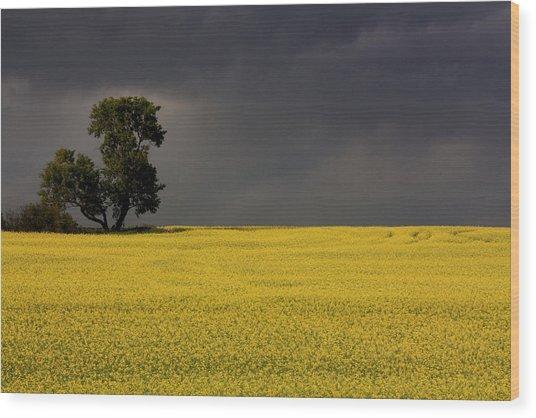 Canola Storm Wood Print