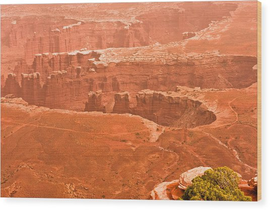 Canyonland N.p. Wood Print by Larry Gohl