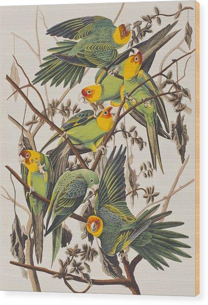 Carolina Parrot Wood Print
