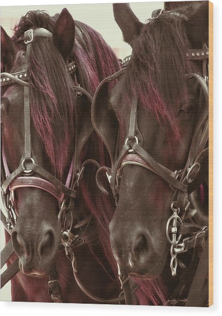 Carriage Ponies  Wood Print by Dressage Design