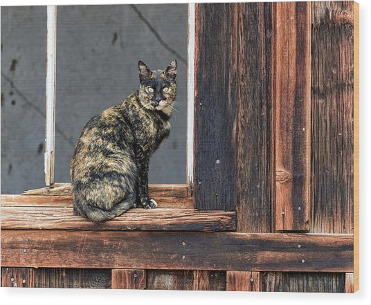 Cat In A Window Wood Print